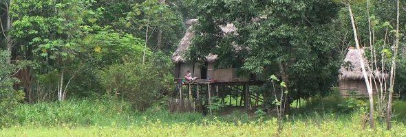 Утренний лес и ливень в Амазонии.