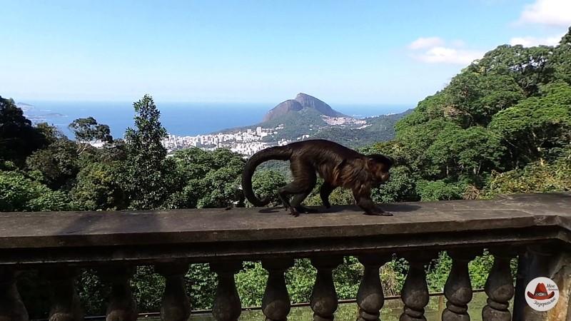 Я тетушка Чарли из Бразилии. Превосходная страна. Там в лесу столько диких обезьян.