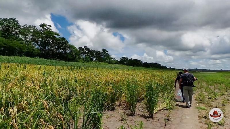 Идем в лодж .Слева рисовое поле.