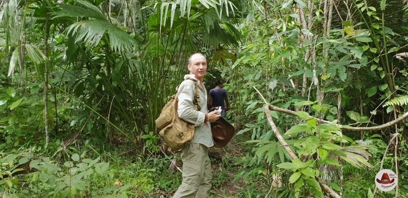 Утренний лес и ливень в Амазонии