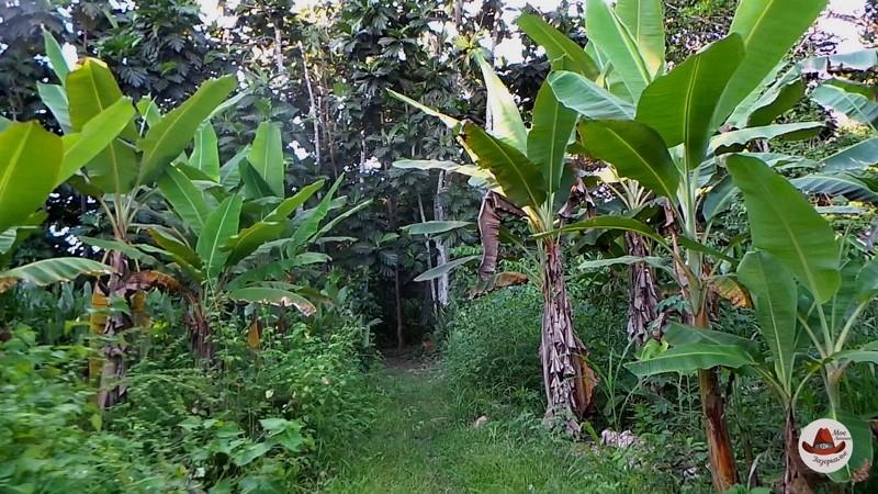 Тропинка в джунгли.